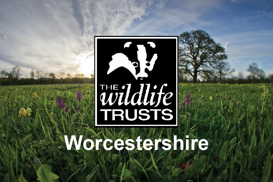 Worcestershire Wildlife Trust Leaflet Design + Print