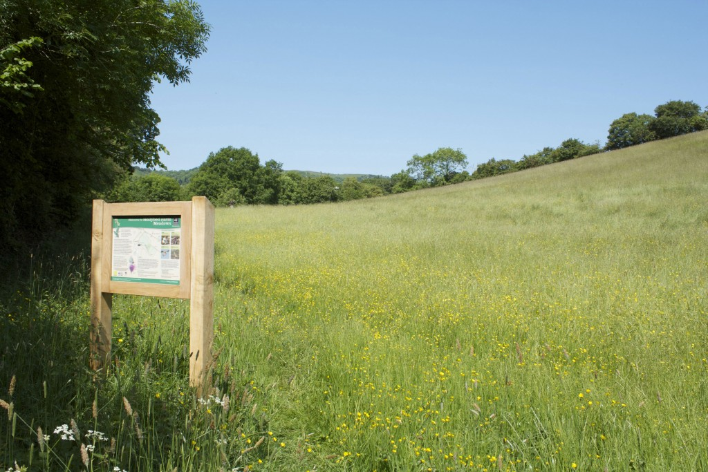 Hollybed Farm Meadow WWT Information Board